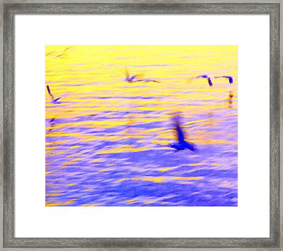 Just Flying Around Doing Nothing  Framed Print by Hilde Widerberg