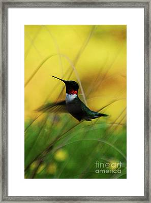 Just Flying Framed Print by Lori Tambakis