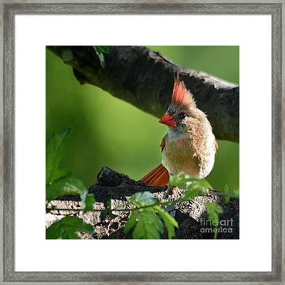 Just For You Framed Print by Nava Thompson