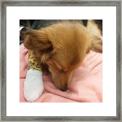 Just Had A Phone Call From The Vets Framed Print