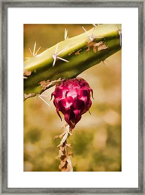 Just Haging Around Framed Print by Scott Campbell
