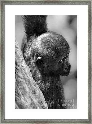 Just Hang'in  Framed Print