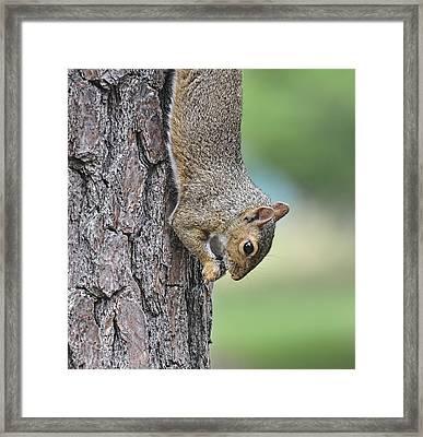 Just Hangin Around Framed Print