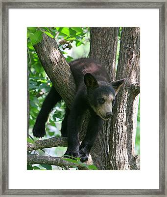 Just Hangin Out Framed Print
