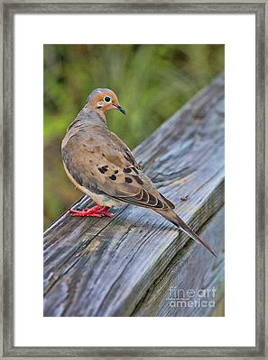 Just Hanging Around Framed Print by Deborah Benoit