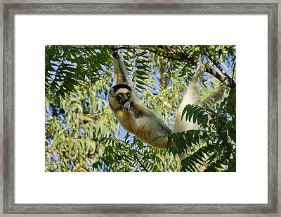Just Hanging Around Framed Print by Michele Burgess