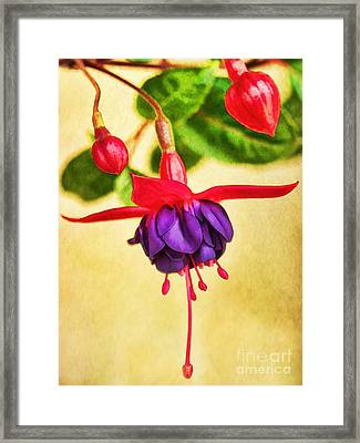 Just Hanging Around Framed Print by Peggy Hughes