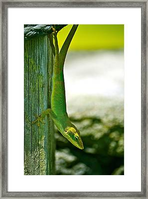 Just Hanging... Framed Print by Lehua Pekelo-Stearns