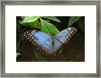 Just Hanging On Framed Print