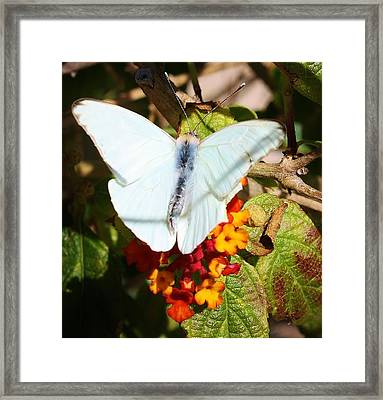 Just Hanging Out Framed Print by Bruce Bley