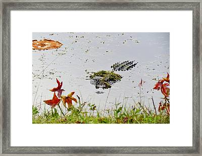 Framed Print featuring the photograph Just Hanging Out by Cynthia Guinn