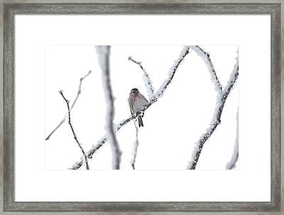 Framed Print featuring the photograph Just Hanging Out by Dacia Doroff