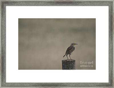 Western Meadowlark On A Fence Post Framed Print
