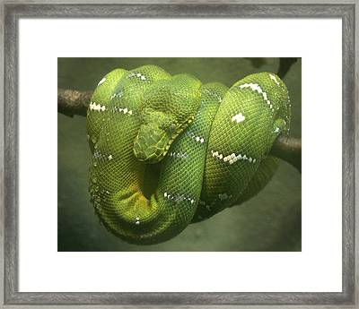 Just Hanging Out Framed Print by Jeff Cook