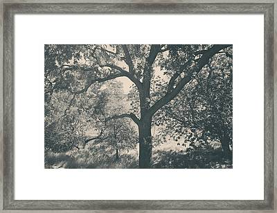 Just Hold On Framed Print by Laurie Search