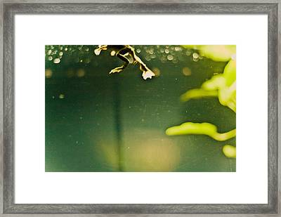 Just Kickin' It Framed Print by Andrew Raby