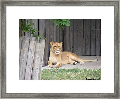 Just Laying Around Framed Print by Andrew Conrad