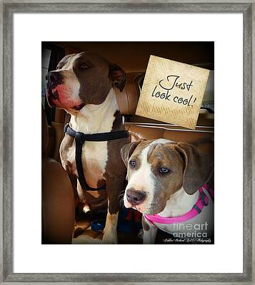 Just Look Cool Framed Print