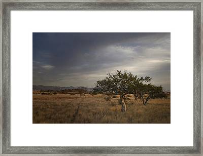 Just Off The Beaten Track Framed Print by A Rey