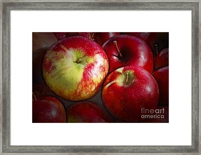 Just  One A Day Framed Print by Sandra Bronstein
