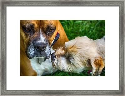 Just One Little Smooch Framed Print by Barry Jones