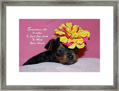 Framed Print featuring the photograph Just One Look by Lorna Rogers Photography