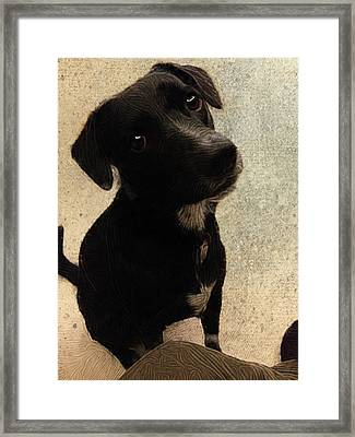 Just One Question... Framed Print by Paul Gioacchini
