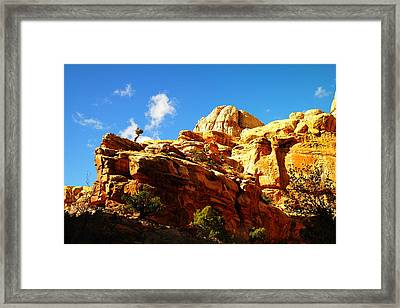 Just One Tree Framed Print by Jeff Swan