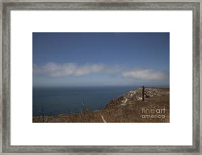 Just Passing By Framed Print by Amanda Barcon