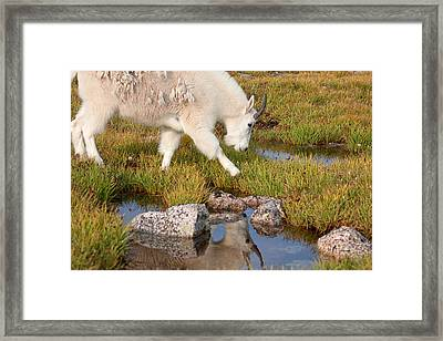 Just Passing By Framed Print by Jim Garrison
