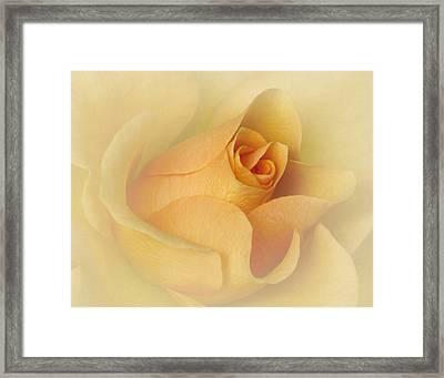 Just Peachy Framed Print by David and Carol Kelly