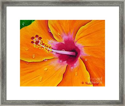Framed Print featuring the painting Just Peachy - Hibiscus Flower  by Shelia Kempf