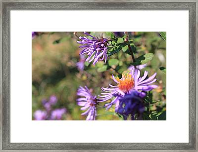 Just Peachy Framed Print by Joanne Ayoub