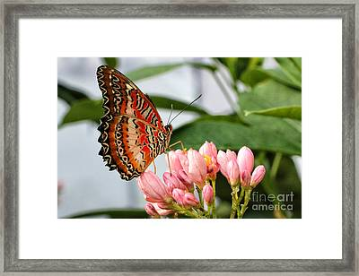 Just Pink Butterfly Framed Print by Shari Nees