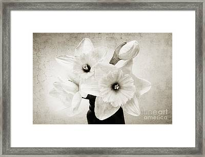 Just Plain Daffy 1 B W - Flora - Spring - Daffodil - Narcissus - Jonquil Framed Print by Andee Design