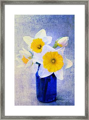 Just Plain Daffy 2 In Blue - Flora - Spring - Daffodil - Narcissus - Jonquil  Framed Print by Andee Design