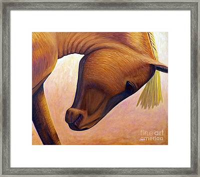Just Plain Horse Sense Framed Print by Brian  Commerford
