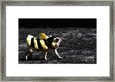 Just Pugging Along At The Speed Of Halloween  Framed Print by Steven Digman