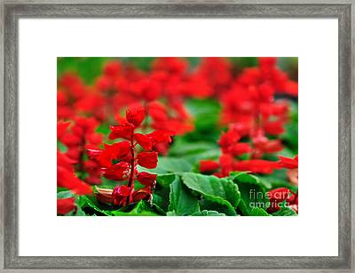 Just Red Framed Print by Kaye Menner