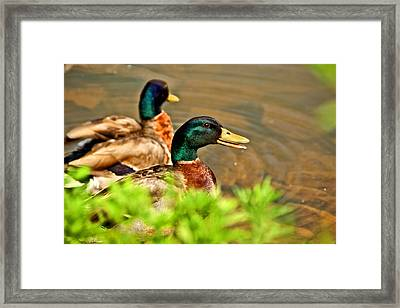 Just Saying II Framed Print by Kathi Isserman