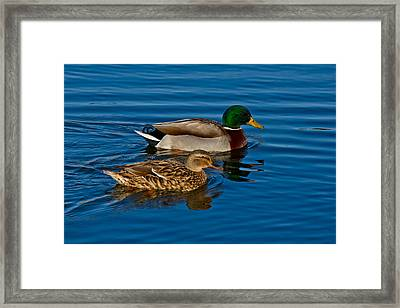 Just Swimming Along Framed Print