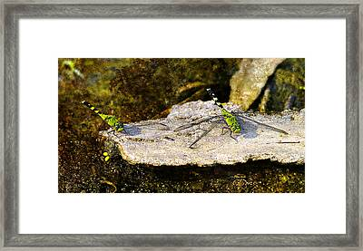 Just Taking A Break Framed Print by J Larry Walker