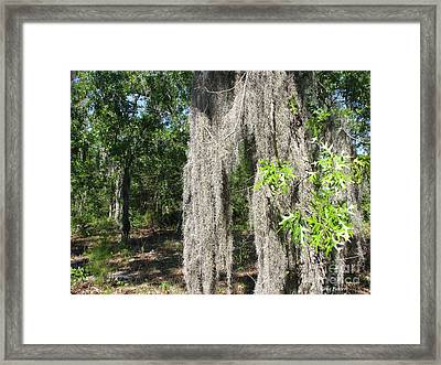 Just The Backyard Framed Print by Greg Patzer