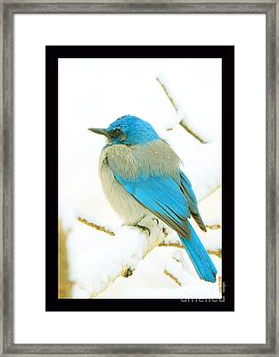 Just This Afternoon Framed Print by Susanne Still