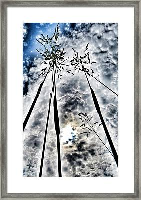 Just Too High... Framed Print by Marianna Mills