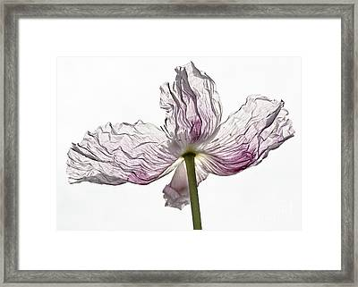 Just Unfolding Framed Print