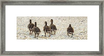 Just Waddling Framed Print by Tammy  Taylor