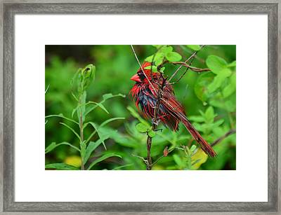 Just Washed My Hair -  51005610 Framed Print by Paul Lyndon Phillips