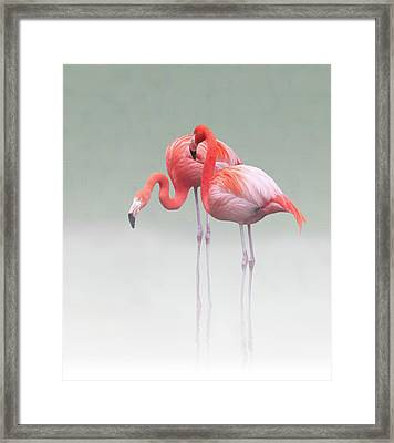 Just We Two ... Framed Print by Anna Cseresnjes