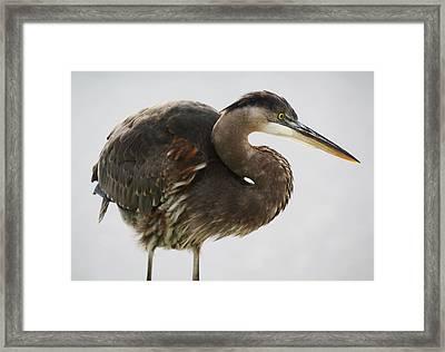 Just Wondering - # 11 Framed Print by Paulette Thomas